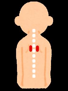背中の肩甲骨の内側のポイント
